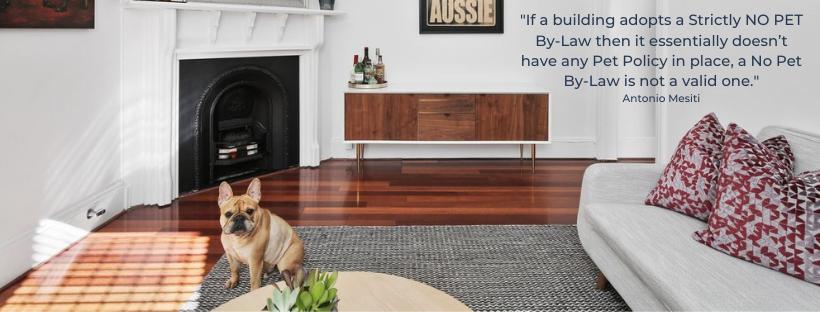NSW Renting with Pets